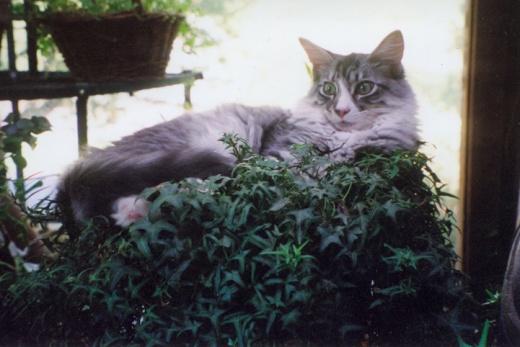 MPM-cat-Emerson